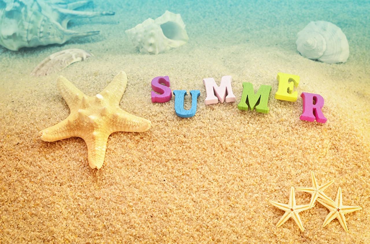 Fotos Seesterne Englisch Sommer Sand text englische englisches englischer Wort
