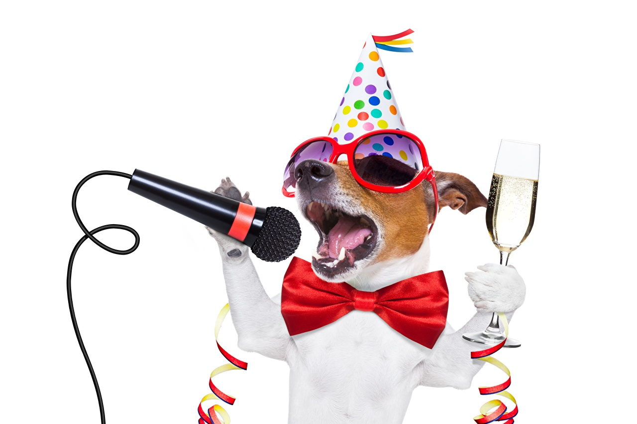 Images Jack Russell terrier dog butterfly Microphone Funny Glasses Stemware Animals Holidays White background Dogs Butterflies mic eyeglasses animal