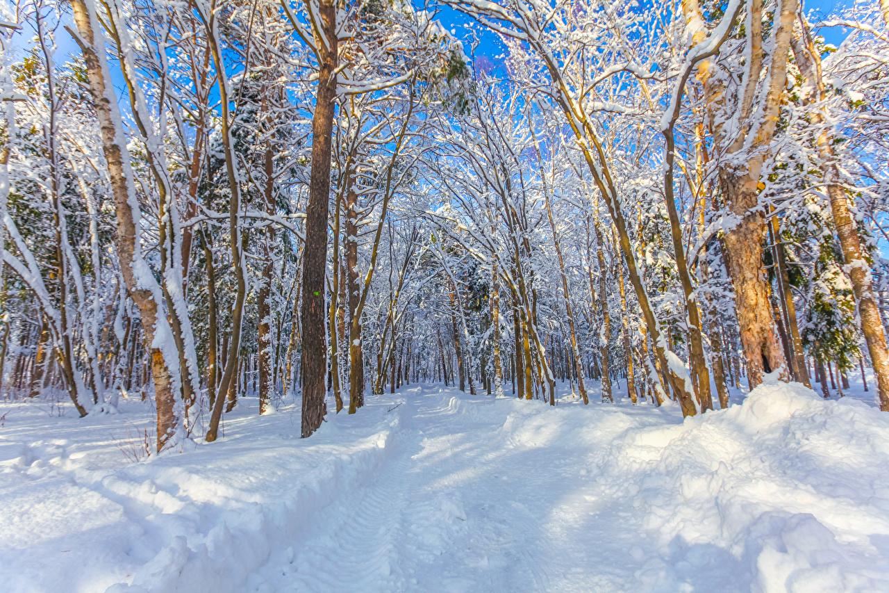 Bilder von Russland Yuzhno-Sakhalinsk Natur Winter Schnee Wälder Bäume