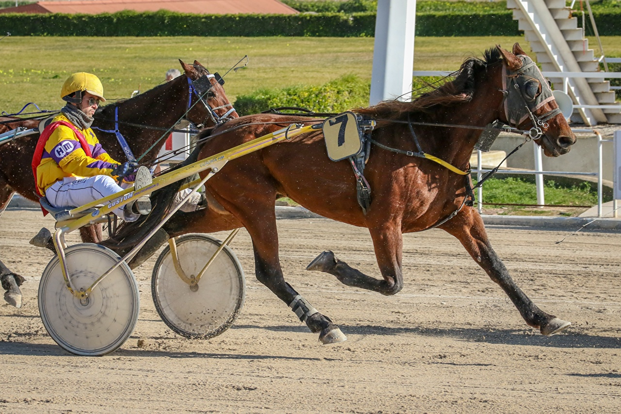 Bilder Hauspferd Helm Mann Laufsport Harness racing Sport Pferde Lauf Laufen