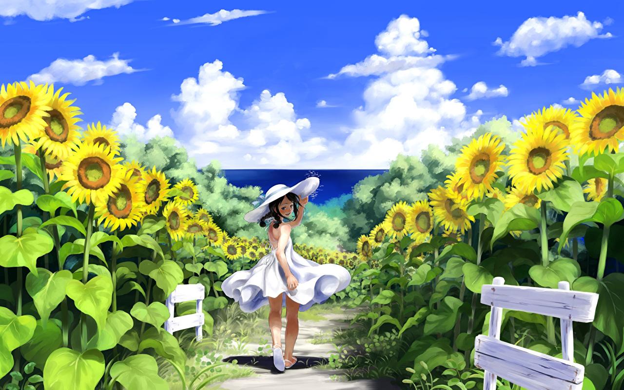 壁紙 ひまわり 畑 Imaoka Pixiv Original 雲 帽子 アニメ 少女 ダウンロード 写真