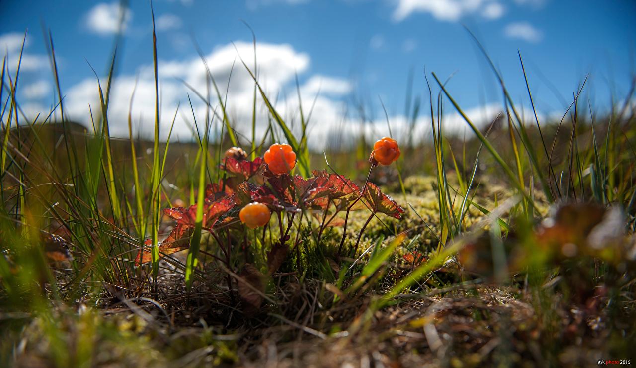 Fotos Bokeh Natur Gras Beere unscharfer Hintergrund
