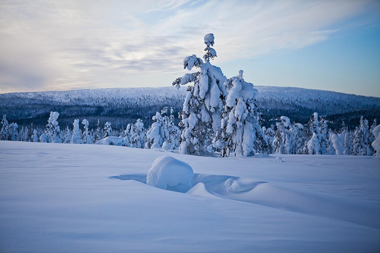 Fonds D Ecran Finlande Hiver Laponie Region Neige Arbre De