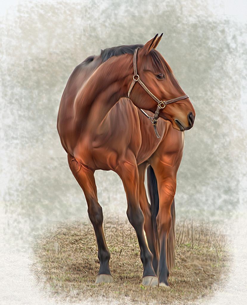 Fotos von Pferde Tiere Gezeichnet  für Handy Pferd Hauspferd ein Tier