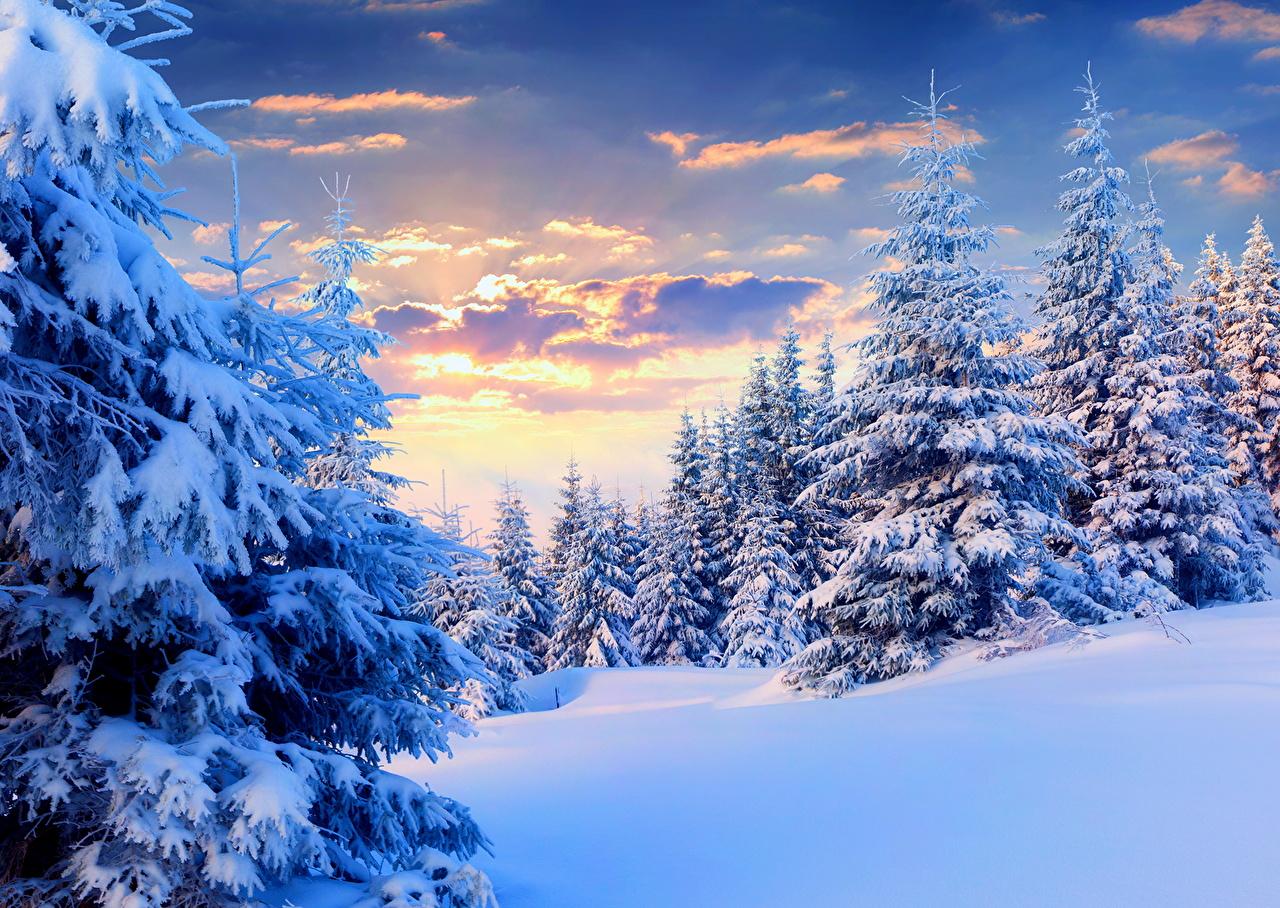 Desktop Wallpapers Nature Spruce Winter Sky Snow Seasons