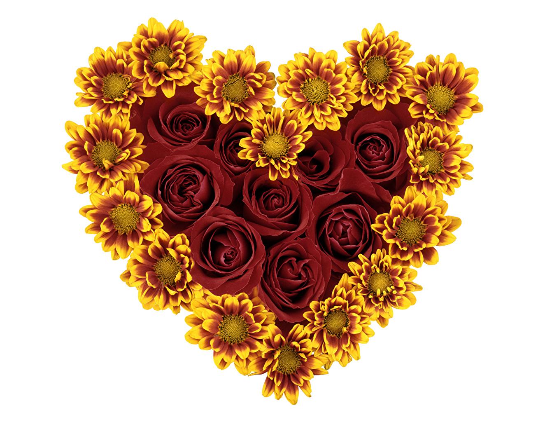 Wallpaper Valentine S Day Heart Roses Flower Sunflowers