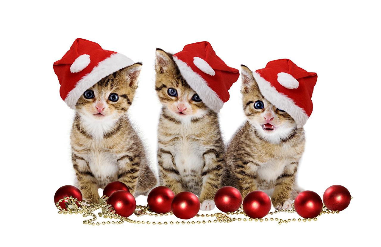 Images Kittens cat New year Winter hat Balls Three 3 animal kitty cat Cats Christmas Animals