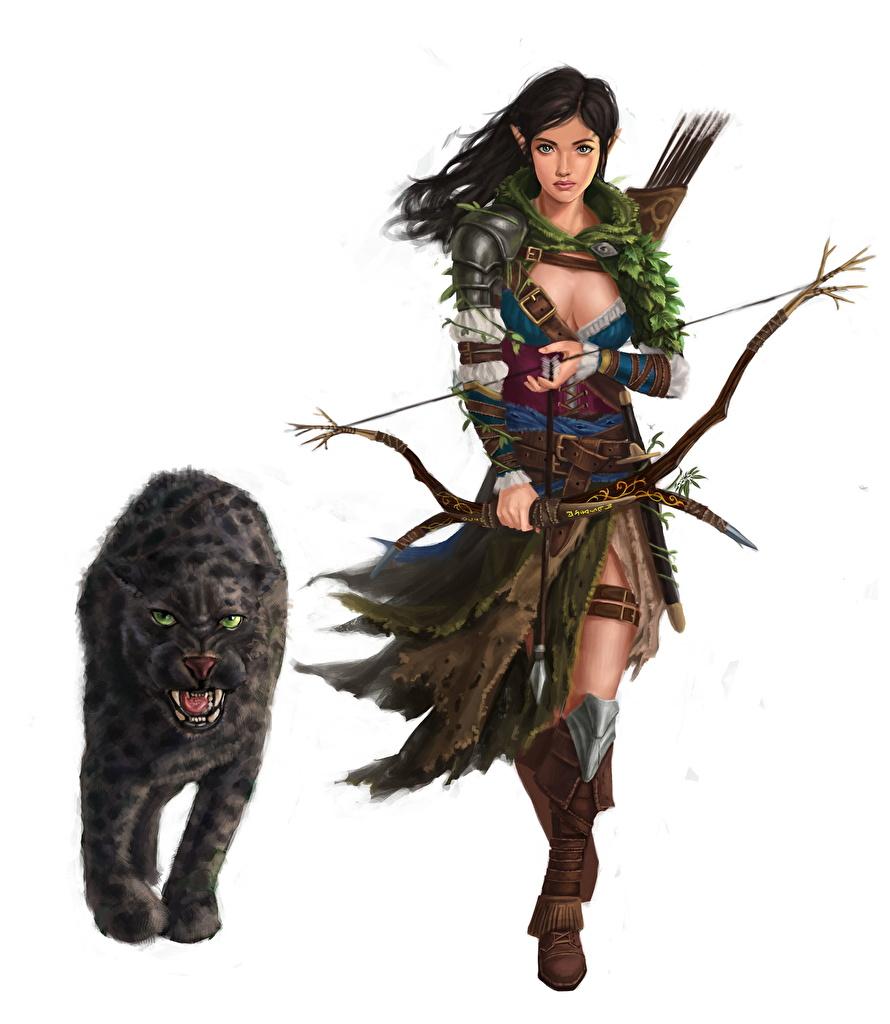 Fotos Bogenschütze Schwarzer Panther Elfen Krieger Bogen Waffen Fantasy Mädchens Weißer hintergrund