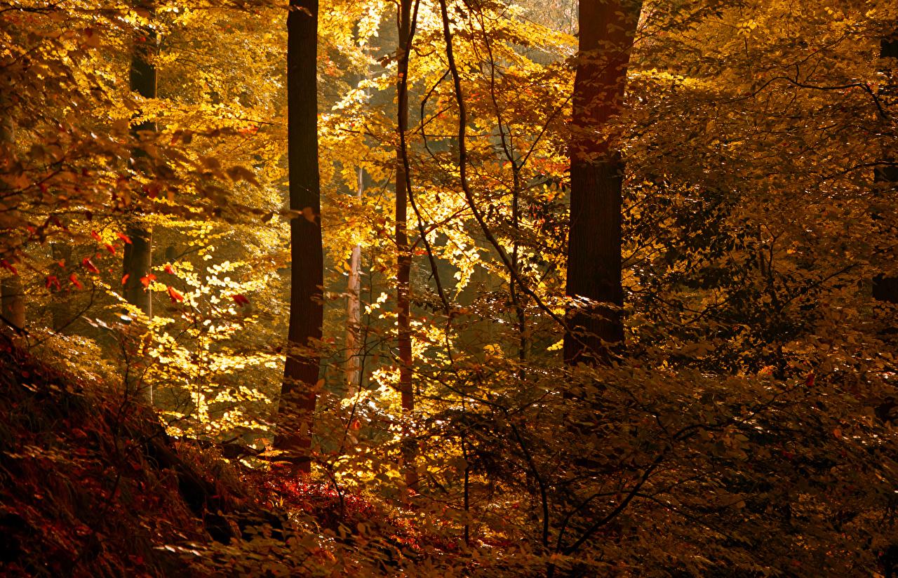 Bilder Natur Herbst Wälder Bäume