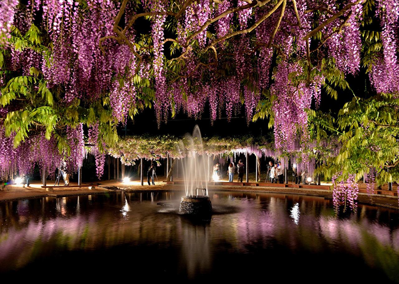 Image Fountains park Flowers Wisteria Night Parks flower night time