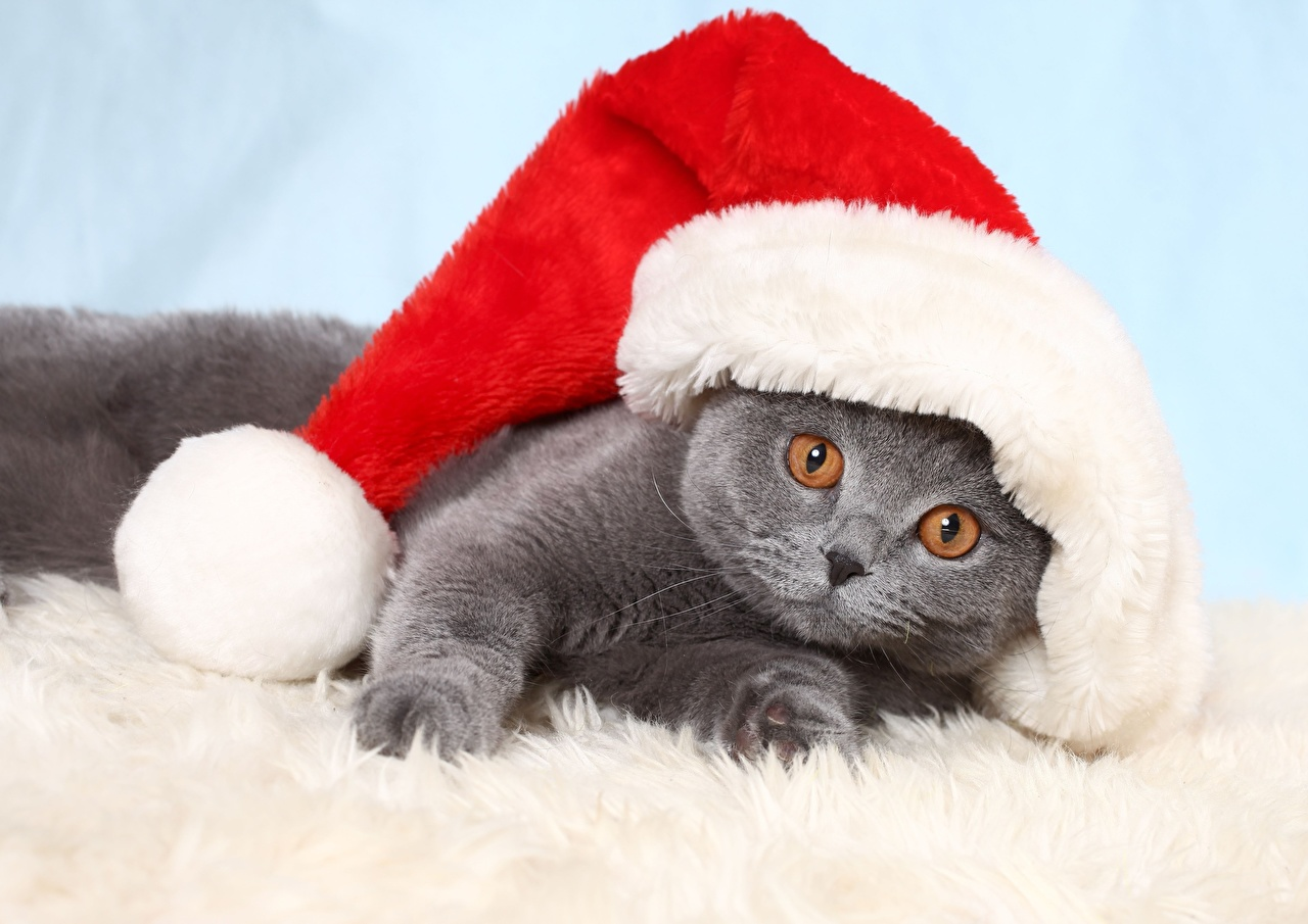 Photo Kittens cat Christmas Lying down Funny Winter hat Animals kitty cat Cats New year laying esting animal