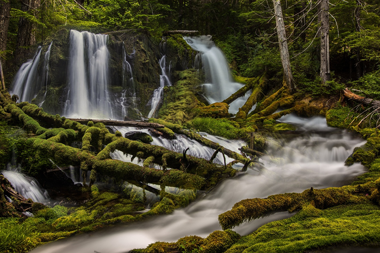 Images Washington USA Big Creek Falls Nature Waterfalls forest Moss river Trees Forests Rivers