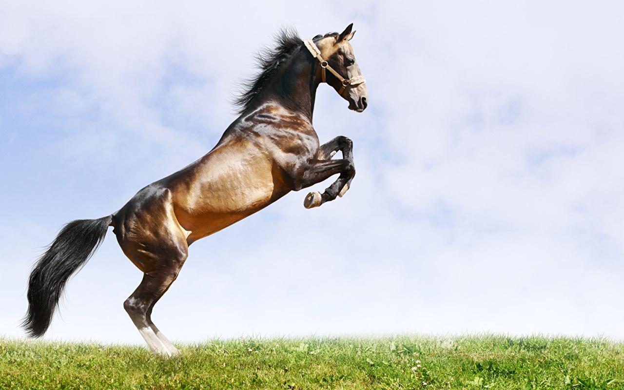 zdjęcie koń Niebo Trawa zwierzę Konie Zwierzęta