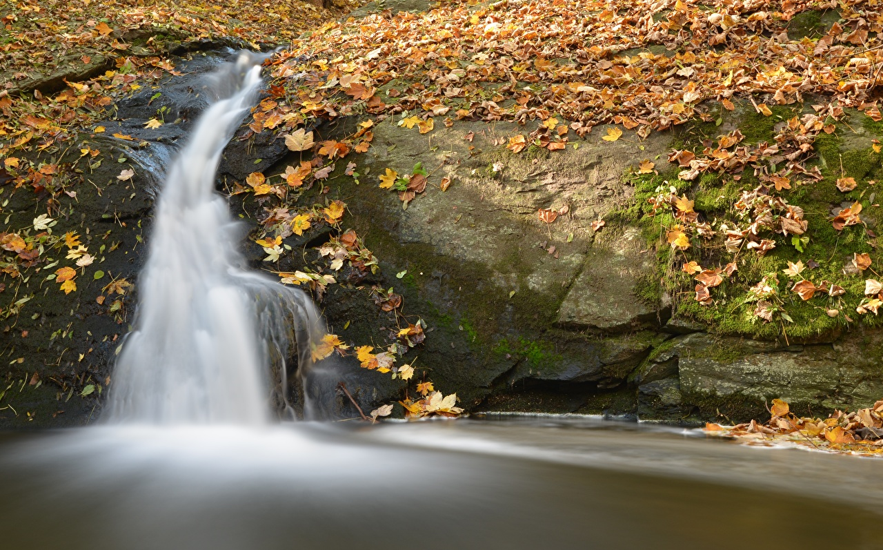 Images Leaf Autumn Stream Nature Waterfalls Moss Foliage Creek brook Creeks Streams