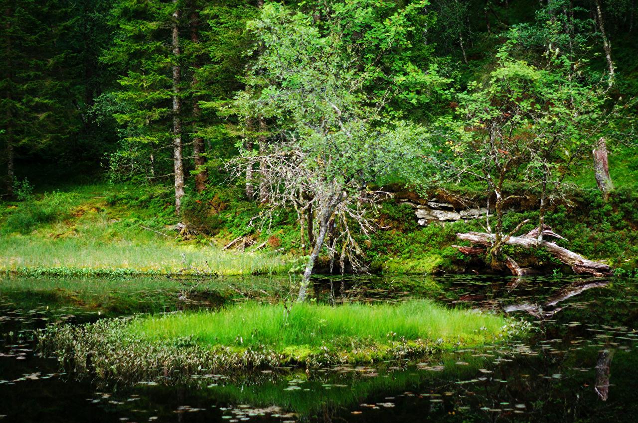 Immagini Norvegia Vindheim Natura Stagno foresta Erba Foreste