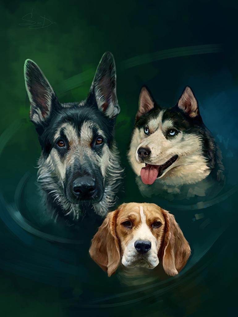 Foto Beagle Shepherd Siberian Husky Hunde Drei 3 Wasser Kopf Tiere Gezeichnet
