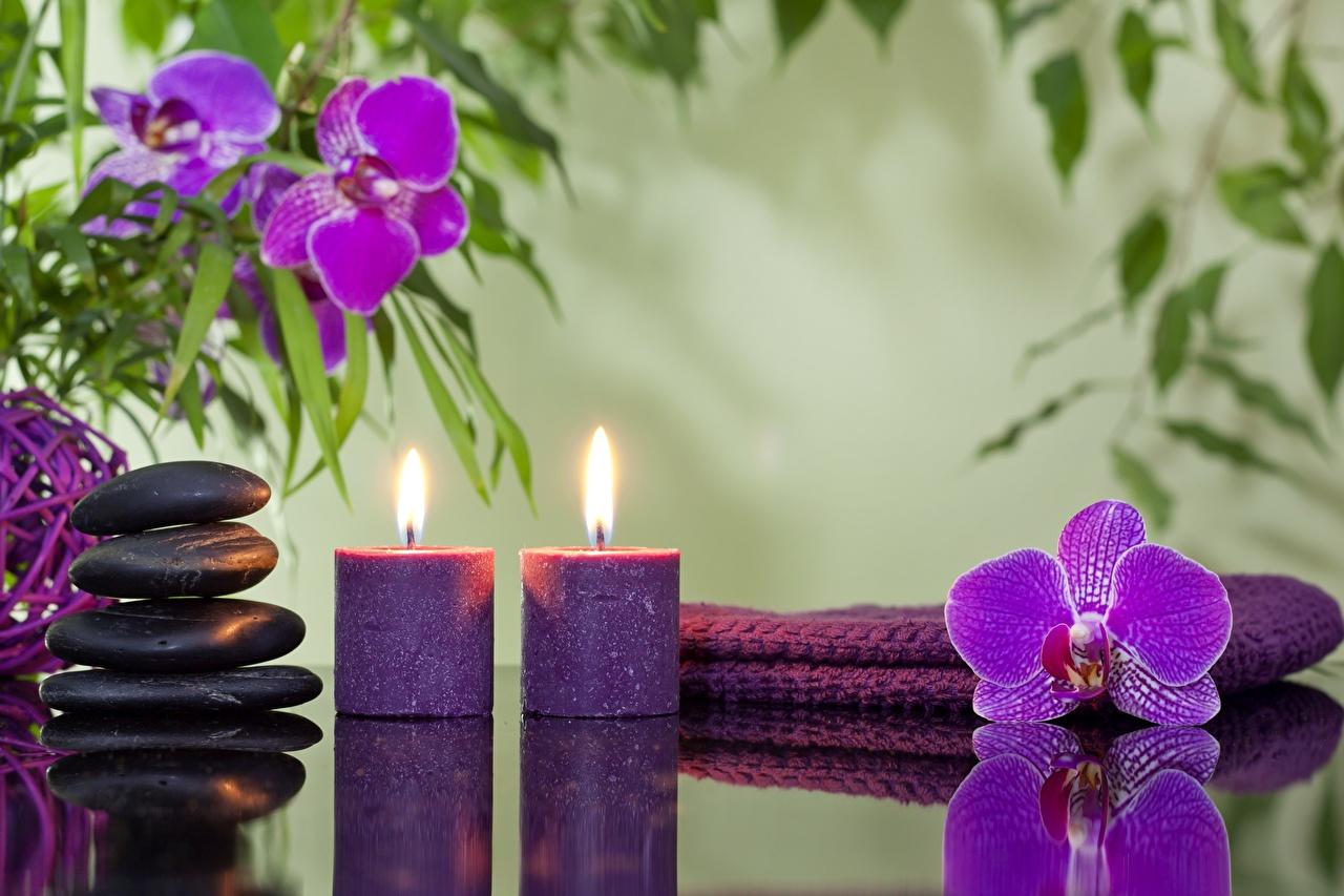 Fotos von Spa Orchideen Blumen Steine Kerzen Orchidee Blüte Stein
