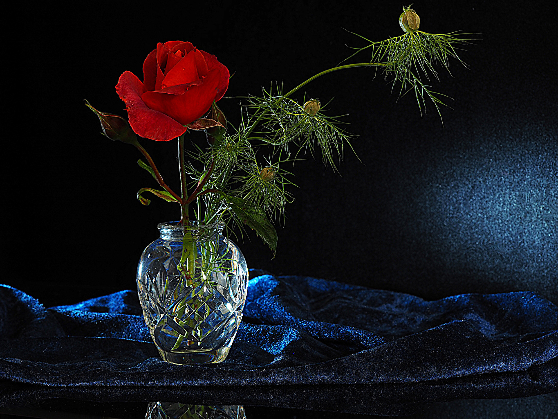 Bilder Rot Rose Blumen Ast Vase Rosen Blüte