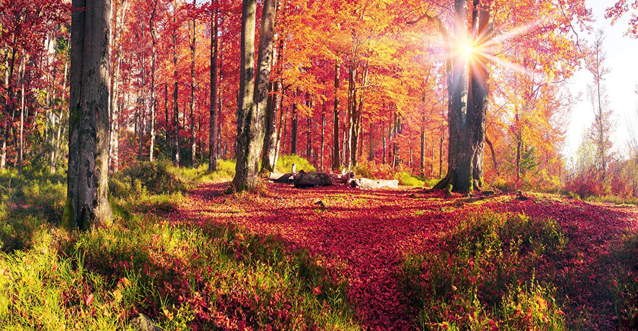 壁紙 ウクライナ 秋 風景写真 カルパティア山脈 光線 木 木の幹