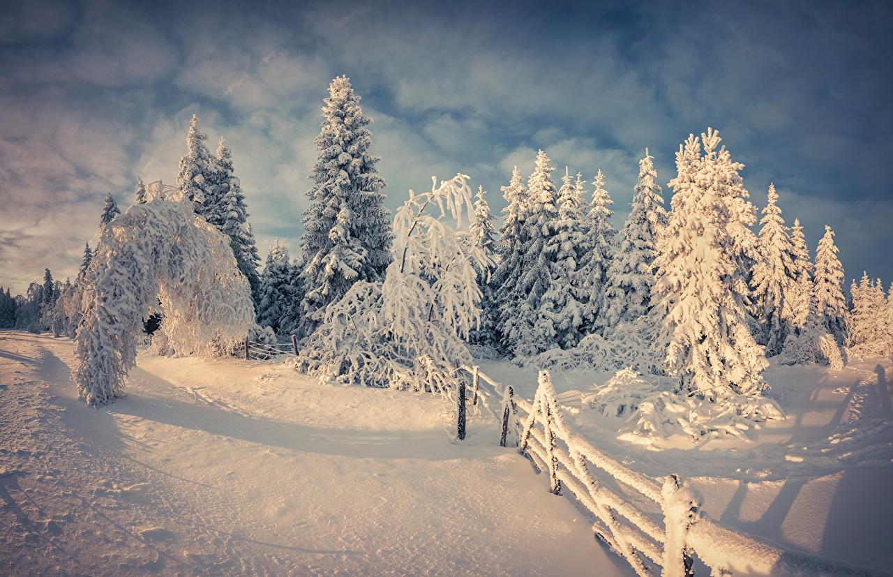 Estaciones del año Invierno Nieve Picea Naturaleza