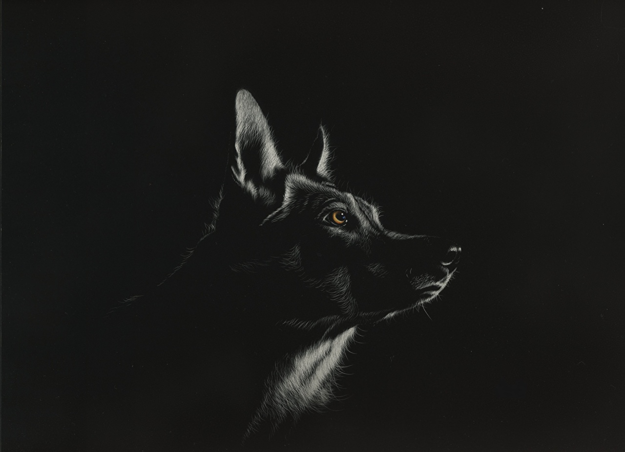 Photo Wolves Black And White Head Animal Painting Art Black