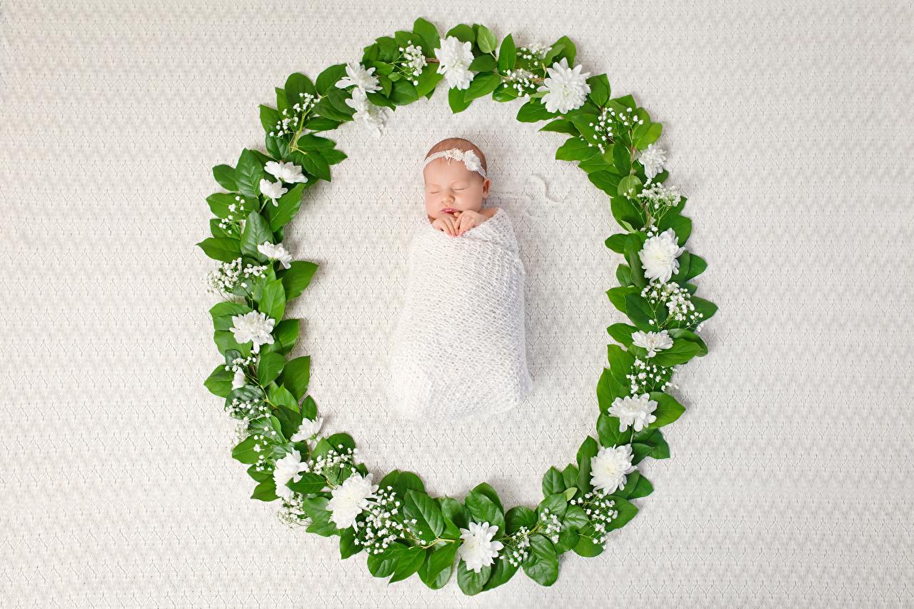 Foto Säugling kind schlafen Pfingstrosen Baby Kinder Schlaf schläft schlafende schlafendes