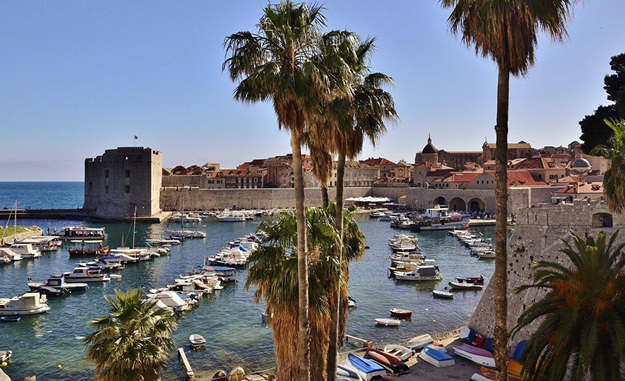 Pictures Cities Croatia Dubrovnik Palms palm trees
