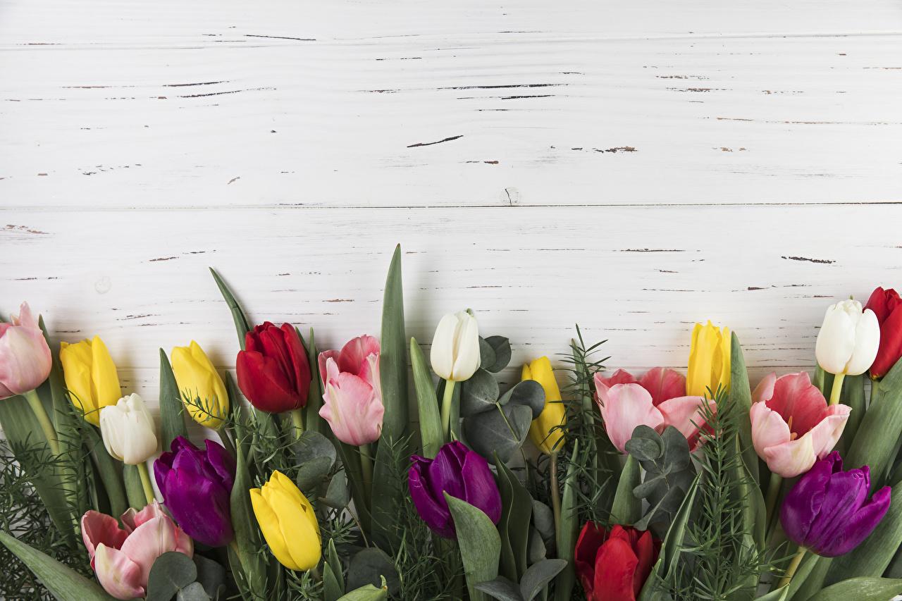 Desktop Wallpapers Multicolor tulip Flowers Template greeting card Wood planks Tulips flower boards