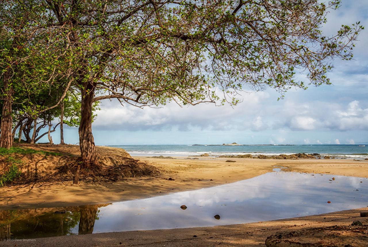 Trópico Costa Rica árvores Praia Praias Naturaleza