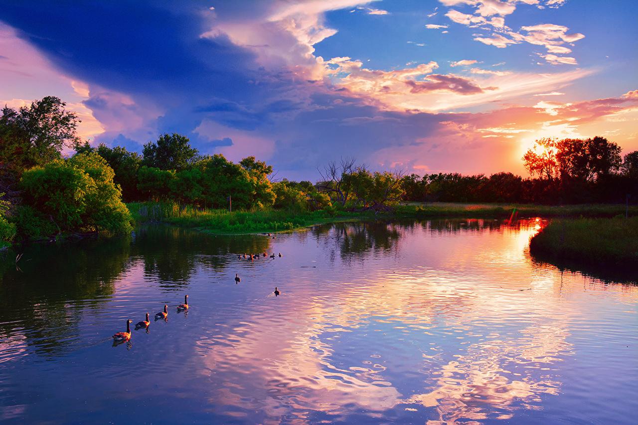 Photos Geese USA Chisholm Creek Kansas Nature Sky park Lake Sunrises and sunsets Water goose Parks sunrise and sunset