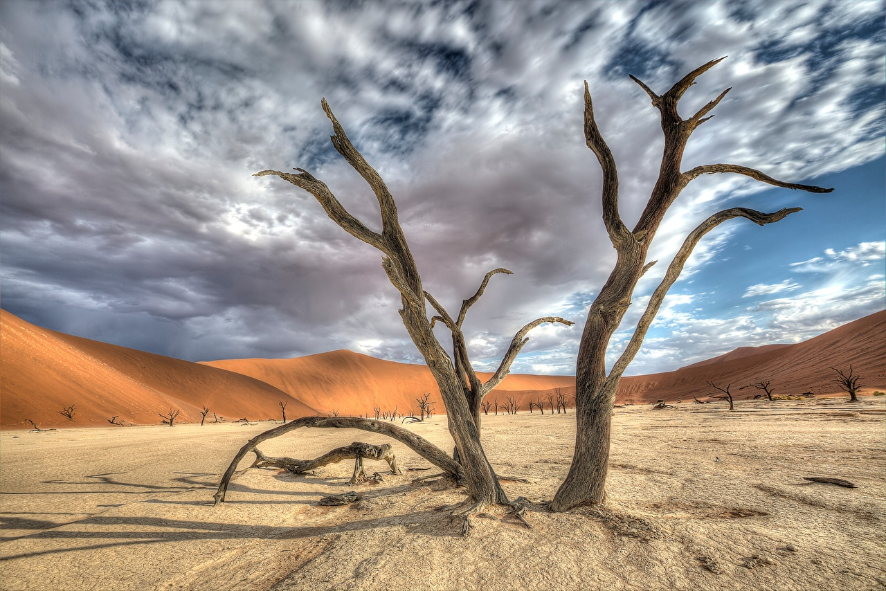 Images Africa Namib Naukluft Park, Deadvlei, Namibia HDRI Nature Sky Sand Trees Clouds HDR