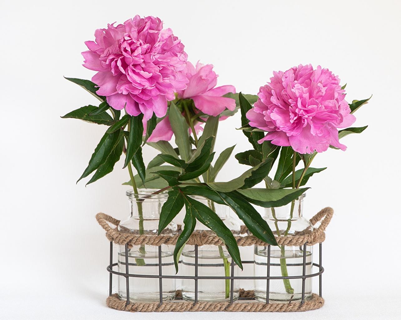 Fotos Rosa Farbe Blüte Weidenkorb Einweckglas Pfingstrosen Grauer Hintergrund Blumen Weckglas