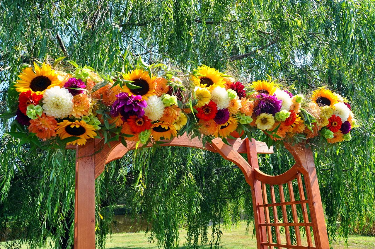 Wallpaper Bouquets Flowers Sunflowers