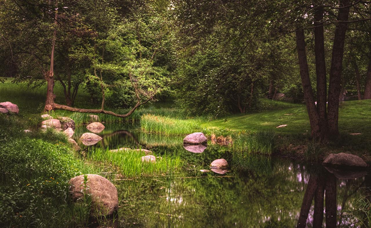Фотографии Берлин Германия Britzer Garten Природа парк Пруд Камни дерева Парки Камень дерево Деревья деревьев
