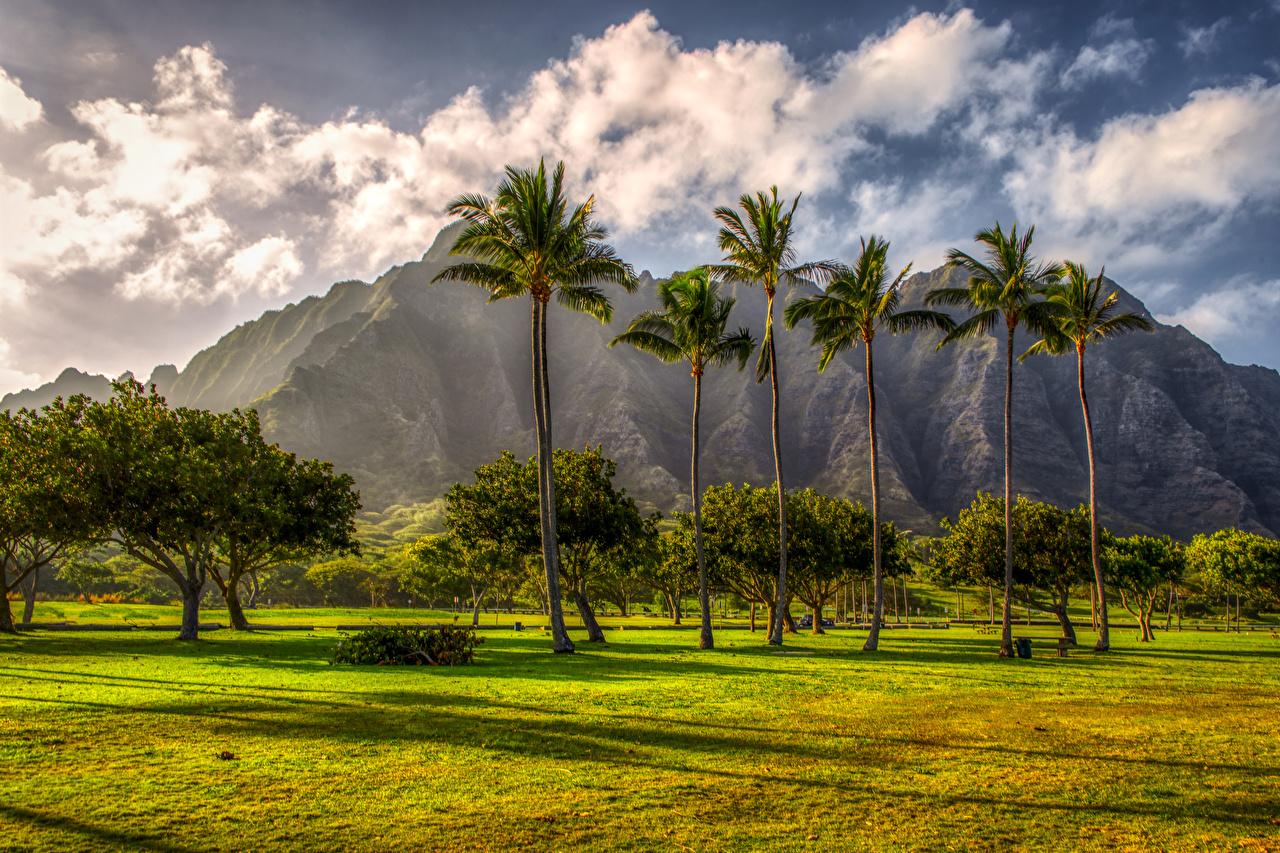 Immagine Hawaii Natura Montagne Palme Tropici Tappeto erboso Alberi Isole delle Hawaii montagna pelouse Prato rasato