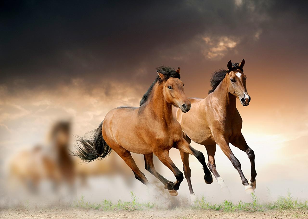 Foto Cavallo che corre Animali Corsa animale