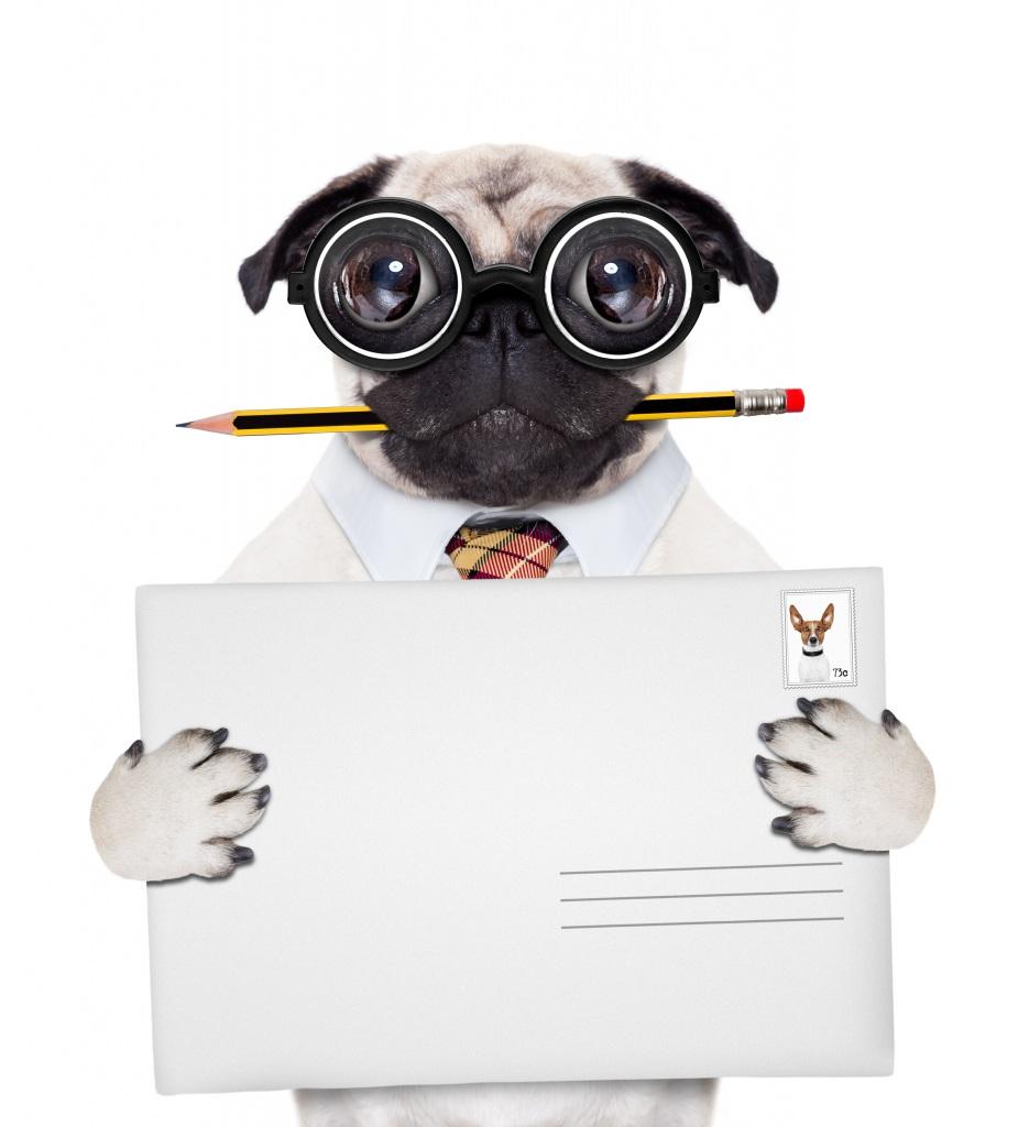 Fotos von Mops (Hunderasse) hund bleistifte Lustige originelle Brille Vorlage Grußkarte Tiere Weißer hintergrund Hunde Bleistift lustiger lustiges komische Kreativ kreative ein Tier