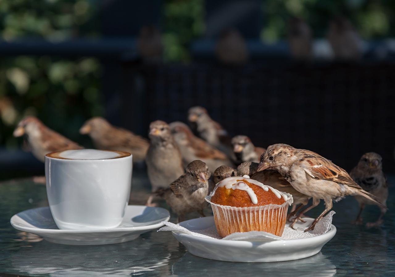 Foto Vogel Sperlinge Keks Kaffee Tasse Tiere Vögel ein Tier