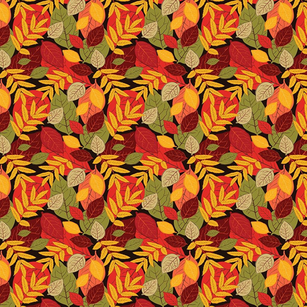 Photo Leaf Texture Autumn Foliage