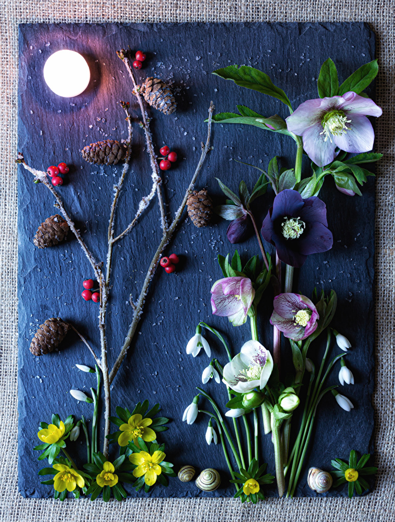 Image Snails Moon Flowers Hellebore Snowdrops Berry Branches Pine cone  for Mobile phone flower Galanthus Conifer cone