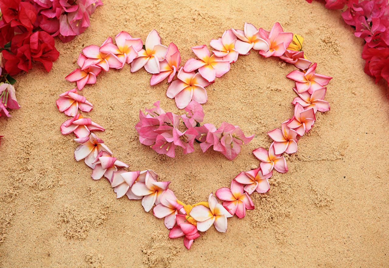 Hintergrundbilder Valentinstag Herz Blumen Frangipani