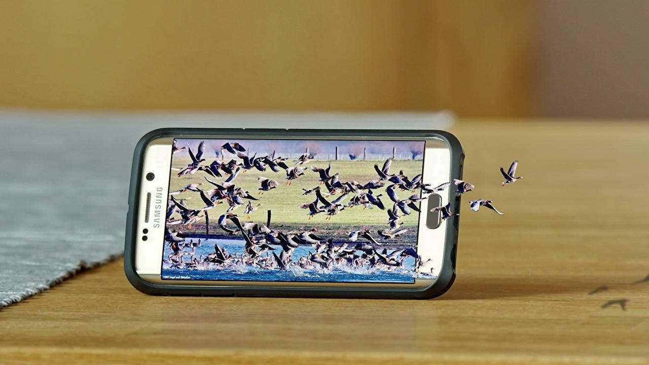 Aves Gansos De perto Criativos Samsung Galaxy S6 Edge Telefone Smartphone Voo animalia, um animal, pássaro, pássaros, criativas, originais, smartphones Animalia
