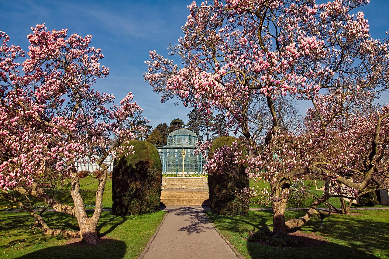 Photos Germany Zoological Botanical Gardens Stuttgart Spring Nature Flowering trees