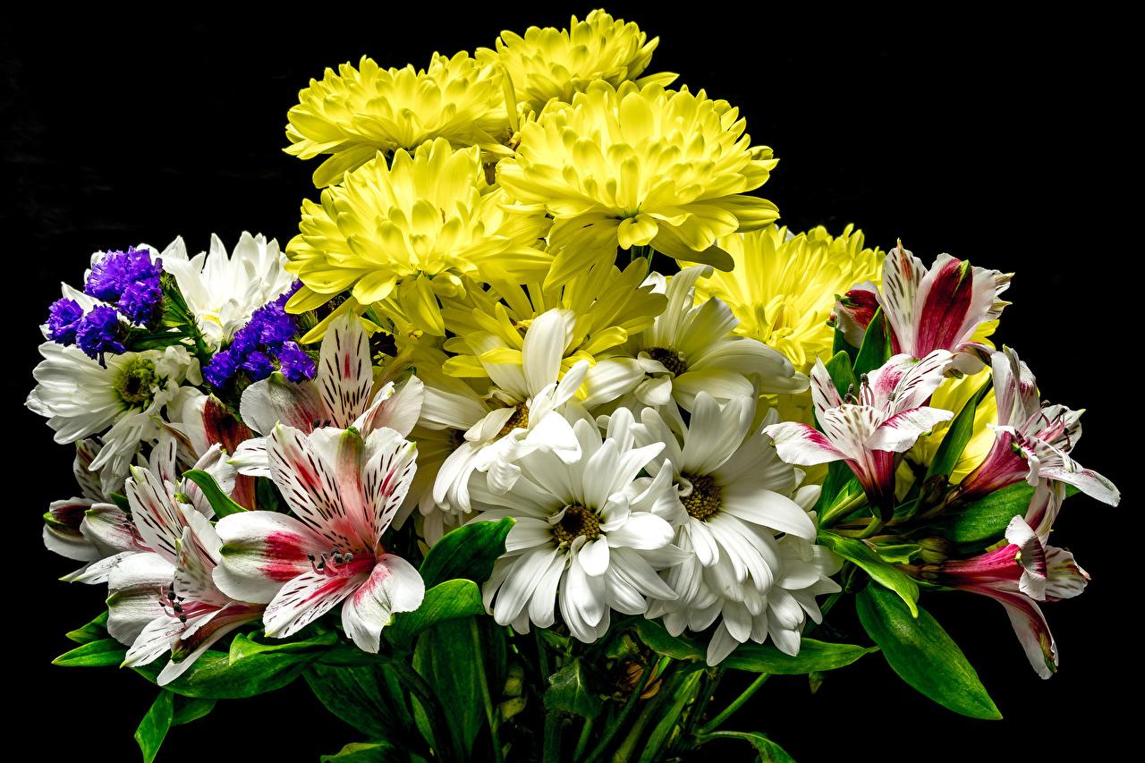 Achtergrond Boeketten bloem Incalelie chrysanthemum Zwarte achtergrond boeket Bloemen Chrysanten