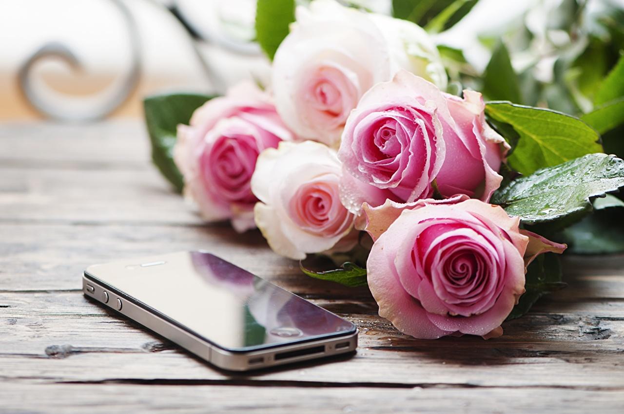 Fotos Smartphone unscharfer Hintergrund Sträuße Rosen Blumen Tropfen smartphones Bokeh Blumensträuße Rose Blüte