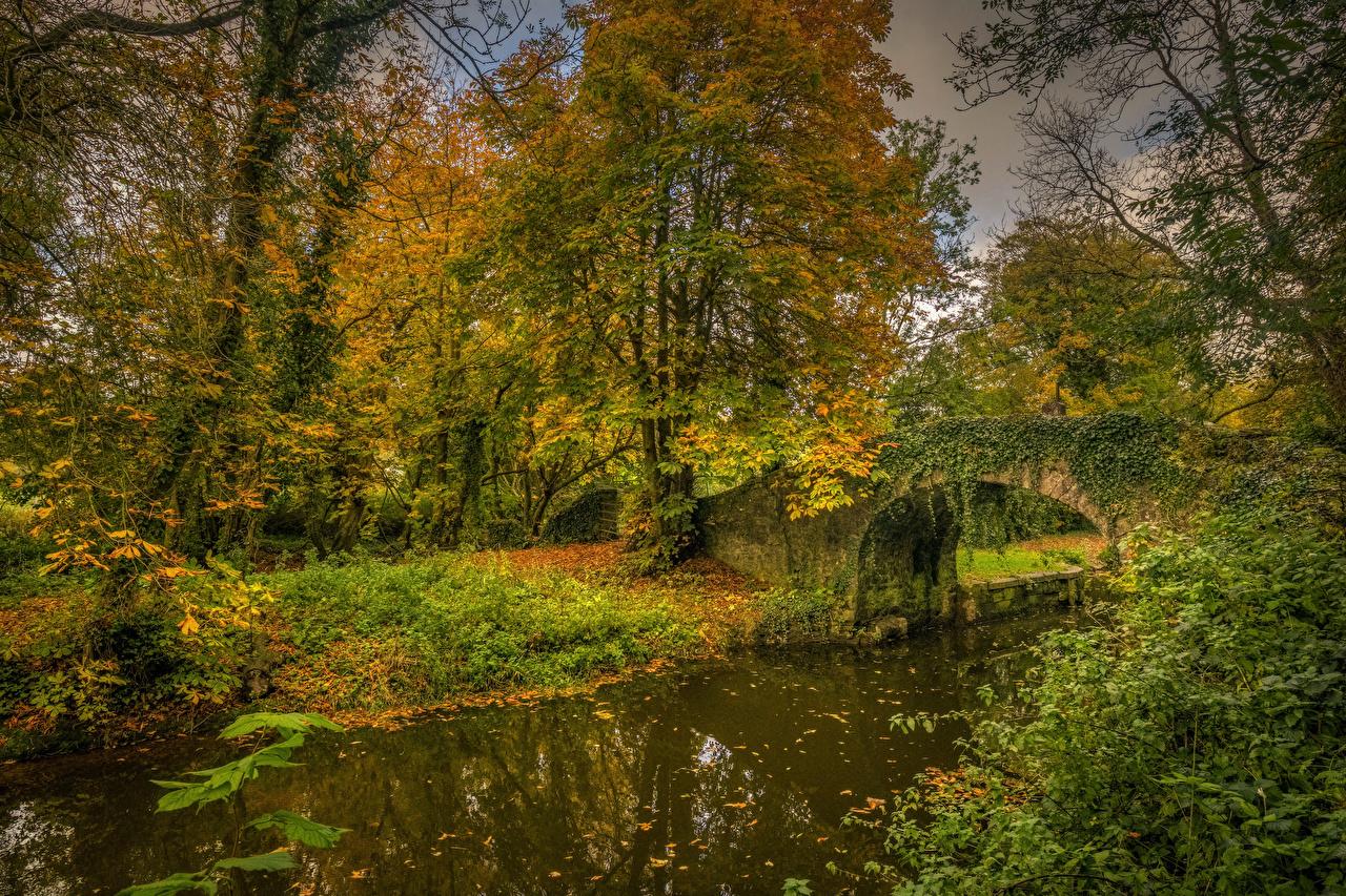 Photos Ireland Boyne Valley Canal Autumn Nature Bridges Trees bridge