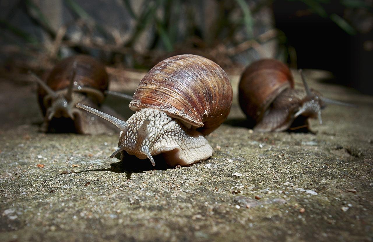 ,蜗牛,三 3,動物,