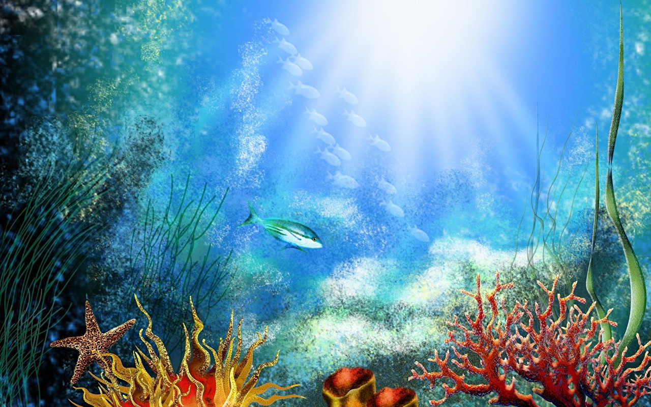 Fondos De Pantalla Mundo Submarino Corales Animalia