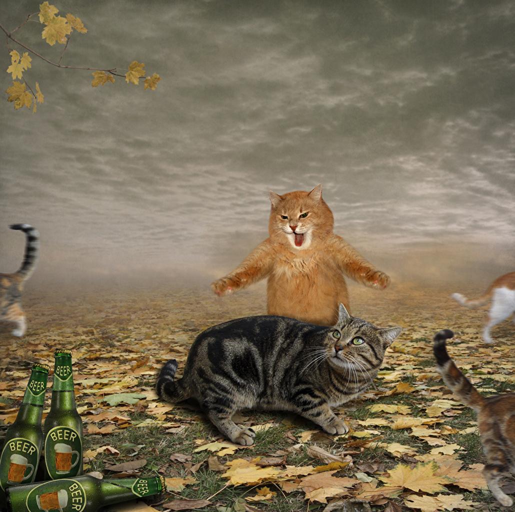 壁紙 飼い猫 恐怖 叫ぶ おもしろい 動物 ダウンロード 写真