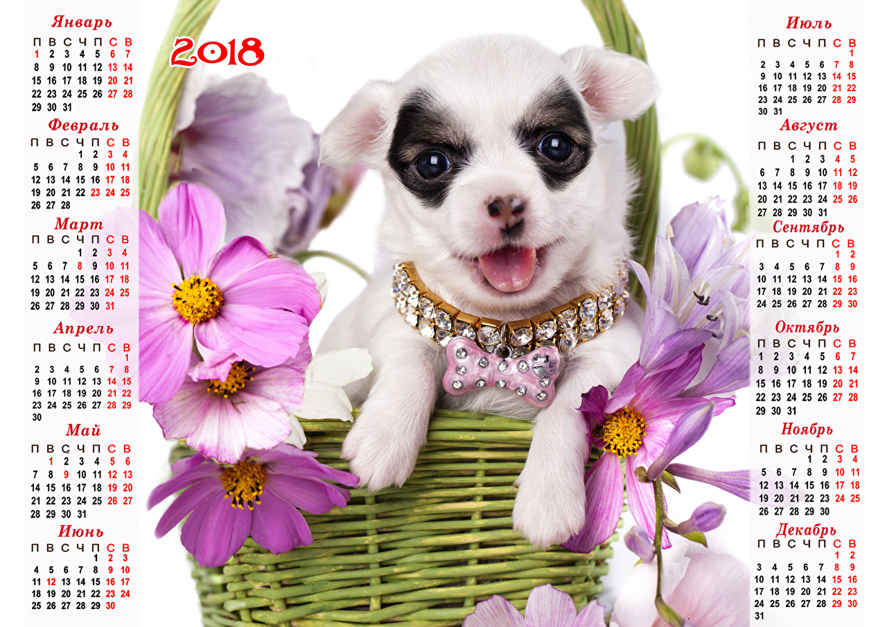 Image 2018 Chihuahua dog Russian Calendar Cosmos plant animal Jewelry Dogs Animals